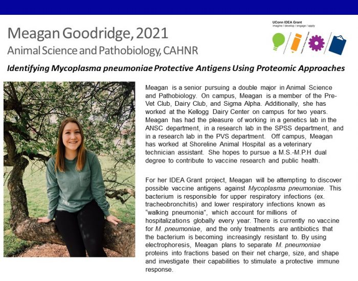 UConn IDEA Grant recipient Meagan Goodridge bio.