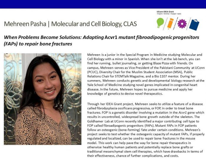 UConn IDEA Grant recipient Mehreen Pasha bio.
