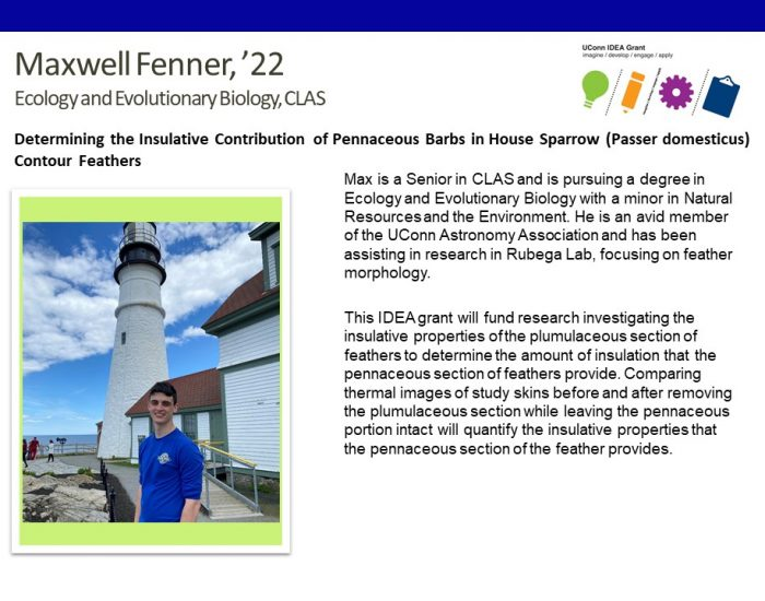 UConn IDEA Grant Recipient Maxwell Fenner Bio.
